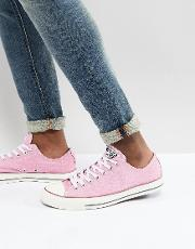 chuck taylor all star ox plimsolls in pink 159542c