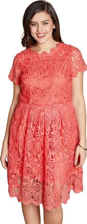 Red Floral Print pacifica Plus Size Skater Dress